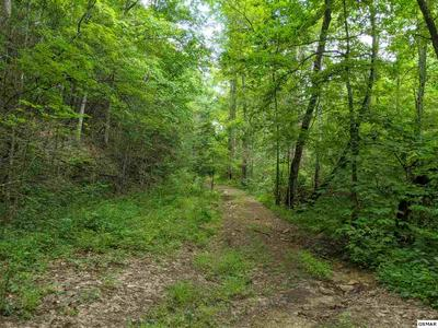 BOXELDER ST LOT 17, Sevierville, TN 37876 - Photo 2