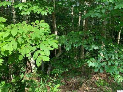 LOT 1 CHAMBERLAIN LANE, Sevierville, TN 37862 - Photo 1