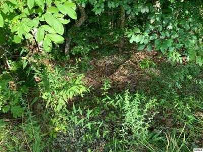 LOT 1 CHAMBERLAIN LANE, Sevierville, TN 37862 - Photo 2