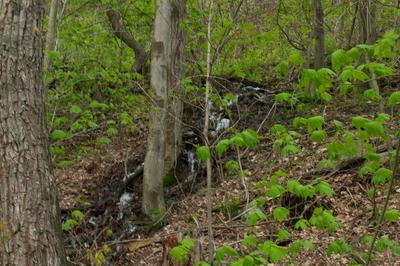 LITTLE SEWELL MOUNTAIN ROAD, Rainelle, WV 25962 - Photo 2