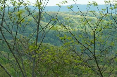 LITTLE SEWELL MOUNTAIN ROAD, Rainelle, WV 25962 - Photo 1