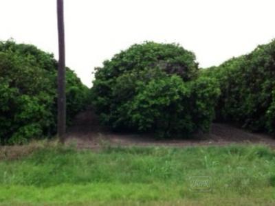 S. SIDE CLARK RD., La Feria, TX 78559 - Photo 1