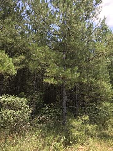 0 HWY 29 / COLE DR., Ovett, MS 39464 - Photo 2