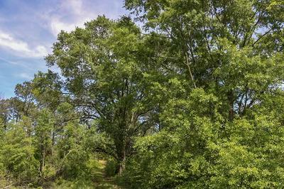 80 WILSON RD, Collins, MS 39428 - Photo 1