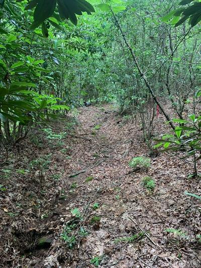 4 SHIRLEY PRESSLEY RD, Glenville, NC 28736 - Photo 2