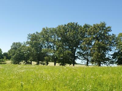 LAVISTA CIRCLE, Harrison, AR 72601 - Photo 2