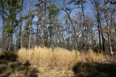 LOT 12 BUFFALO RIVER ESTATES, Jasper, AR 72641 - Photo 2