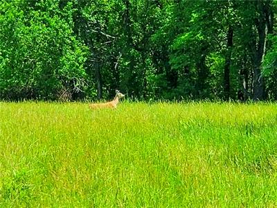 W 287 STREET, Louisburg, KS 66053 - Photo 2
