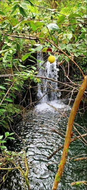 28-668 KAUPAKUEA HOMESTEAD RD, Papaikou, HI 96783 - Photo 1