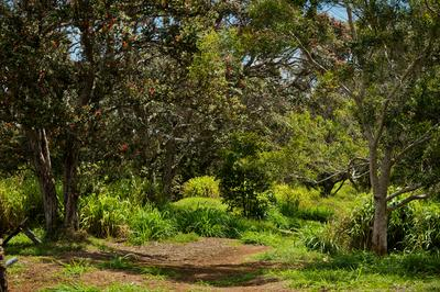 OLD STABLE RD, PAAUILO, HI 96776 - Photo 2