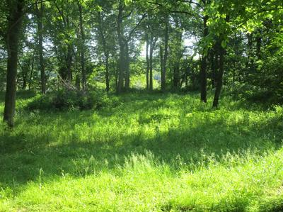 LOT 52 RIVER BLUFF BEACH ROAD, BRANDENBURG, KY 40108 - Photo 1
