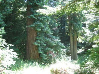 101 CALIFORNIA AVE, Arcata, CA 95521 - Photo 2
