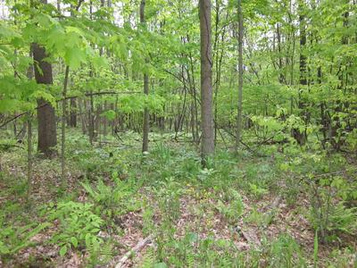 154.79 ACRES STRAIGHT LINE ROAD, Freedom, IN 47431 - Photo 2
