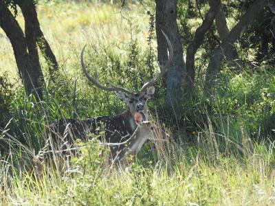 16673 HIGHWAY 41, Mountain Home, TX 78058 - Photo 2