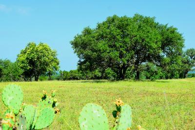 0 NONE, Bandera, TX 78003 - Photo 2