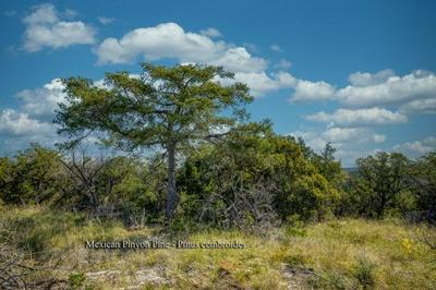 0 W FM 337, Leakey, TX 78873 - Photo 2
