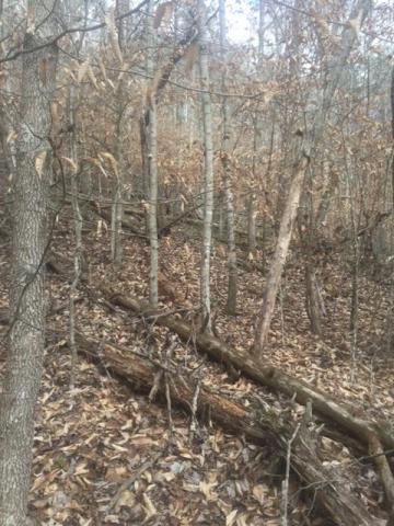 BLACK FOX HARBOR RD, Maynardville, TN 37807 - Photo 2