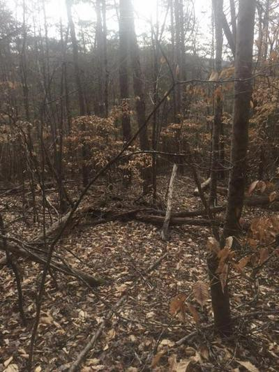 BLACK FOX HARBOR RD, Maynardville, TN 37807 - Photo 1