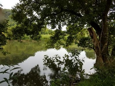 TBD BEN BLOOMER RD, SNEEDVILLE, TN 37869 - Photo 2