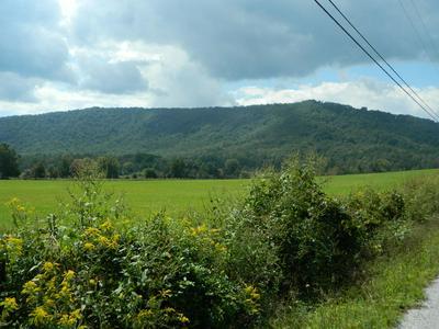 MILL CREEK RD, Sunbright, TN 37872 - Photo 1