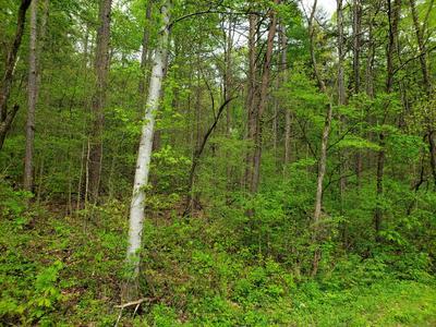 PAR 68 S RUSHY SPRINGS RD, Talbott, TN 37877 - Photo 1