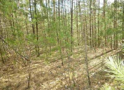TR-5 MOSSY COVE WAY, SEVIERVILLE, TN 37876 - Photo 1