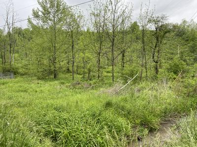 TRACT 3 A MT. VIEW RD, Robbins, TN 37852 - Photo 2