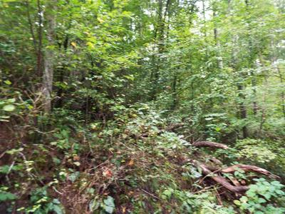 PARCEL 053.00 MOOSEWOOD SPRING WAY, Hartford, TN 37753 - Photo 2