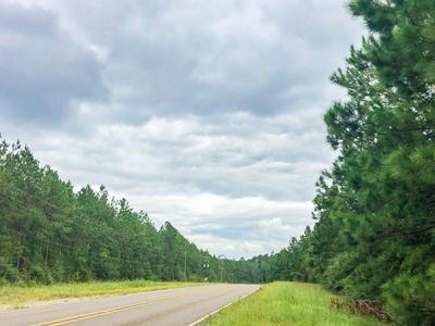 43.8 AC FM 1005, Jasper, TX 75951 - Photo 1