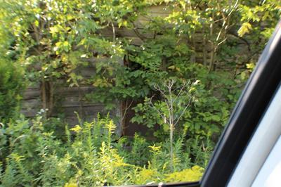 1 GAINES ROAD, Sadieville, KY 40370 - Photo 1