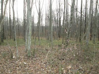 0 - 6 ACRES SPRING ROAD, WALLINGFORD, KY 41093 - Photo 1