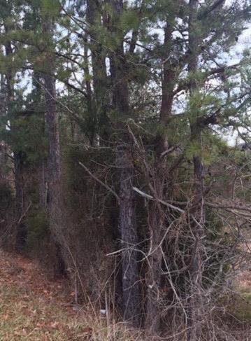 1036 FAIRGROUND RIDGE RD, Beattyville, KY 41311 - Photo 2