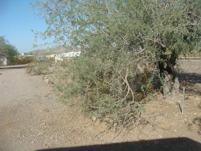 490 N PILGRIM PL, Quartzsite, AZ 85346 - Photo 2
