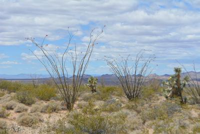 LOT 3627 W YELLOW BIRD DR, Yucca, AZ 86438 - Photo 2