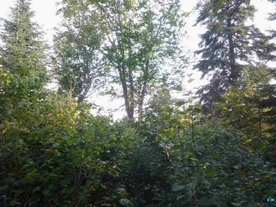 XXX FOREST RD - UNNAMED, Finland, MN 55616 - Photo 1