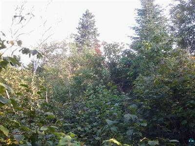 XXX FOREST RD - UNNAMED, Finland, MN 55616 - Photo 2