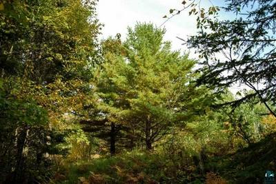 XXX PINE TREE TR, Ely, MN 55731 - Photo 1