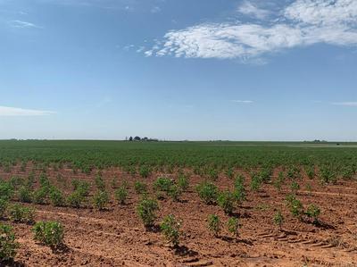 0 TIGER, Ropesville, TX 79358 - Photo 2