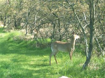 725 TOWAMENSING TRL, Penn Forest Township, PA 18210 - Photo 1