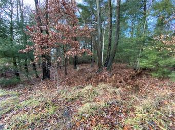 OLD STAGE ROAD, Penn Forest Township, PA 18229 - Photo 2