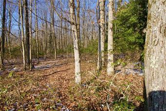 WINTERGREEN LANE, Penn Forest Township, PA 18229 - Photo 1