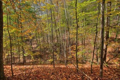 0 FORESTRY ROAD, Amherst, VA 24572 - Photo 2