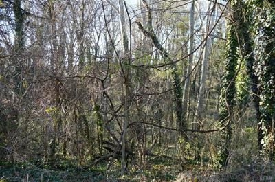 0 BROOKE STREET, Brookneal, VA 24528 - Photo 1