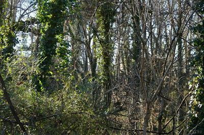 0 BROOKE STREET, Brookneal, VA 24528 - Photo 2