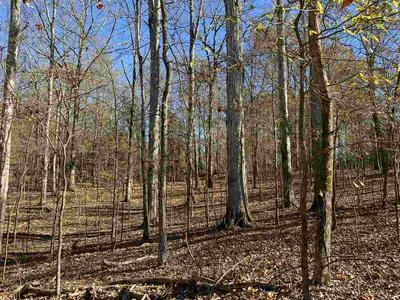 0 JUNE DR, Unincorporated, TN 38068 - Photo 1