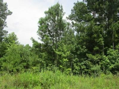 CHARLIE POUNDS RD, Stantonville, TN 38379 - Photo 1