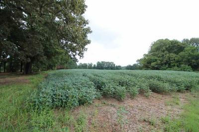 0 HOLLY GROVE RD, Covington, TN 38019 - Photo 1