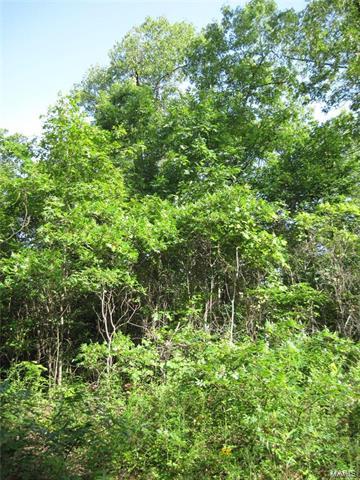 0 SOUTH TBD HWY 49, Bixby, MO 63623 - Photo 2