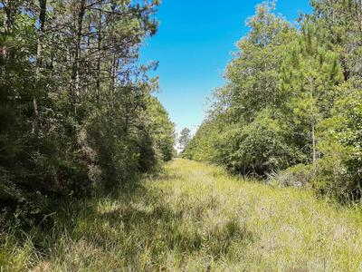 000 PINEWOOD FOREST, Devers, TX 77538 - Photo 1