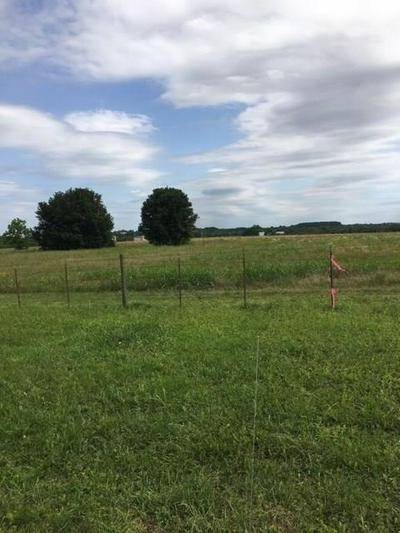 0 COUNTY ROAD 313, Plantersville, TX 77363 - Photo 2